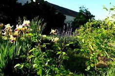 Zahrada - Mílův úhlavní nepřítel:-)