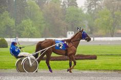 Practicing at the Harness Track in Saratoga Springs, right across the street from the Thoroughbred track