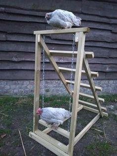 Chicken Coop Designs, Diy Chicken Coop Plans, Backyard Chicken Coops, Building A Chicken Coop, Backyard Farming, Chickens Backyard, Chicken Roost, Chicken Barn, Chicken Life