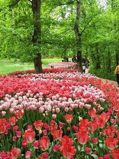 tulipani nel parco del castello di Pralormo
