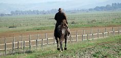 Maremma butteri - Maremma's cowboys
