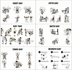 Gym Workout Program