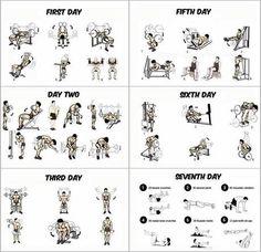 Gym Workout Program