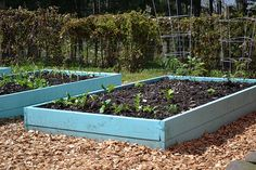 PERFECT!! aqua raised beds - wood chip surround