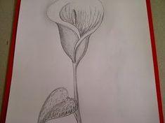 Como dibujar flores. Cómo dibujar una  Cala (Alcatraz, Lirio de agua) - YouTube Body Art, Tattoo Designs, Lily, Tattoos, Drawings, Painting, Youtube, Ideas Para, Peace Lily