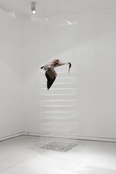 Claire Morgan's suspended sculptures