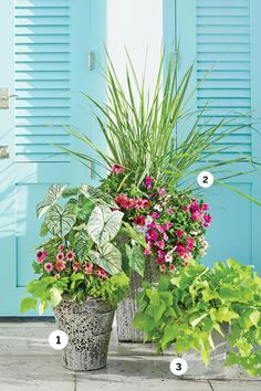 Bring a Bold Trio Together - 3 Florida-Inspired Container Gardens - Southernliving. For a rustic look that complements the stone walk, Daniel chose terra-cotta containers with a mottled glaze. Florida Landscaping, Florida Gardening, Garden Landscaping, Florida Plants, Gardening Zones, Farmhouse Landscaping, Container Gardening Vegetables, Container Plants, Low Maintenance Garden