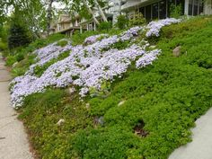 Slopes are a great place to trade lawn for low-care groundcovers that are more effective at absorbing runoff.