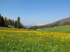12 Epic Day Hikes in the Western United States, Part 2 - Meadows of Bonneville Pass in Shoshone National Forest, Wyoming