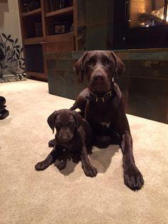 Tucker and Tanner -- aka TNT.