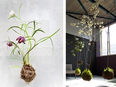 living, breathing art.  and blossoming trees, just hanging about in your living room.