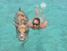 See swimming pigs at Major's Cay in the Exumas!