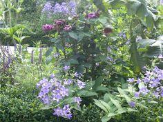 Duncan Terrace | Projects | Richard Miers - Garden Design Terrace, Garden Design, Projects, Balcony, Log Projects, Blue Prints, Patio, Landscape Designs, Decks