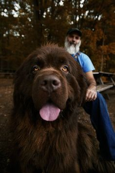 Lol sweetest dog ever! Newfoundland Dog