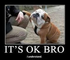 88 best most famous dogs images on pinterest family friendly dogs