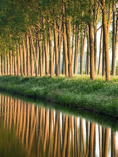 Magnificent Trees around the World !! Part 2 -Damse Vaart at sunrise - Damme, Belgium.