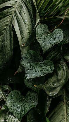 Leaves Wallpaper Iphone, Plant Wallpaper, Beach Wallpaper, Nature Wallpaper, Mobile Wallpaper, Dark Green Wallpaper, Iphone Homescreen Wallpaper, Iphone Wallpapers, Dark Green Aesthetic