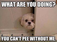 Peeing is a multi mammal task