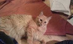 Hjälper till.. på katters vis, dvs lägger helt beslag på tyget.. :)