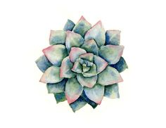 Succulent Art Print Contemporary Gardening Watercolor Abstract by Artist DJR #Realism