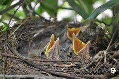 Hongerige vogels in de hulst en meer mooie foto's van tuinen