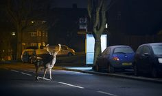Urban wildlife: when animals go wild in the city