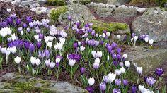 FB-aakerholt Planters, Spring, Plant, Window Boxes, Pot Holders, Flower Planters, Pots