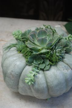 Pumpkins + Succulents! How to make beautiful arrangements with pumpkins and succulents.