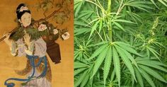 Cannabis. Even the word is enough to bring people closer or drive them further away. Although the topic of legalization is controversial in the USA, not all regions have felt this way. In fact, the Korean peninsula has a long history connected to this plant. Worn, smoked, or sold, cannabis products helped ancient Korea have some high times.