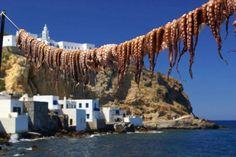 Octapus drying in the sun, Greece. Kos, Greece Today, Santorini Villas, Myconos, Go Greek, Greece Islands, Crete Greece, Ocean Creatures, Greece Travel