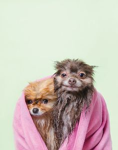 Completely adorable photos of wet dogs will melt your heart