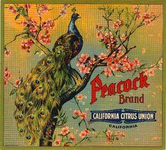 Riverside Peacock 2 Orange Citrus Fruit Crate Label Art Print | eBay