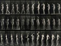 edward muybridge photos   1000+ ideas about Muybridge on Pinterest   Eadweard Muybridge, Plates ...