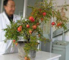 arvores Roma como  fazer paarvores frutíferas em va ora conseguir ela ficar bonita  e  botar fruto?