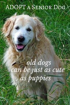 Old dogs can be just as cute as puppies. And...they're already past the chewing stage, aren't rambunctious and they sure know how to snuggle! Adopt A Senior Dog!