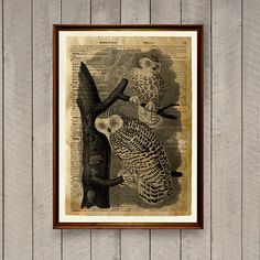 Bird poster Owl print Rustic decor Animal art WA849
