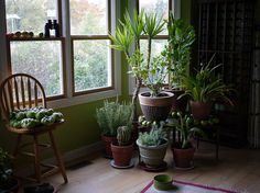 9 Houseplants That Clean The Air And Are Basically Impossible ToKill