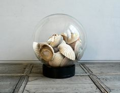Could Possibly Do This With All The Shells We Have From Seattle & Maui