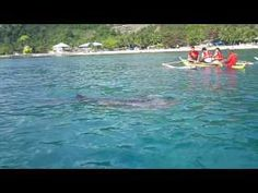 Swimming with Whale Sharks in Oslob, Cebu. Swimming With Whale Sharks, Cebu, Photo And Video, Outdoor Decor, Travel, Viajes, Destinations, Traveling, Trips