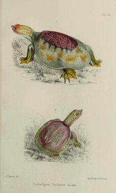 T.1 atlas (1883-1885) - Faune de la Sénégambie / par A.-T. de Rochebrune.