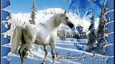 white horse in the snow wolf Good Night Friends, Have A Good Night, Good Night Quotes, Good Day, Horse Photos, Horse Pictures, Snow Wolf, Unicorn Horse, Happy Wishes