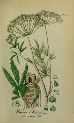 Sämmtliche Giftgewächse Deutschlands : - Biodiversity Heritage Library