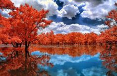 Most Beautiful Photography of Nature - Bing images Infrared Photography, Reflection Photography, Nature Photography, Photography Wallpapers, Amazing Photography, All Nature, Amazing Nature, World's Most Beautiful, Beautiful World