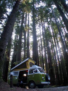 VW Westfalia in the woods…