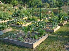 Have a vegetable garden Farm Life, Vegetable Garden, Vegetables, Plants, Image, Greenhouses, Bucket, New York, Google
