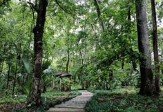 Kanapaha Botanical Gardens - a little farther than I'd call local, but I still want to visit! Central Florida, Natural Wonders, Botanical Gardens, Farming, Things To Do, Beautiful Places, Road Trip, Places To Visit, Around The Worlds