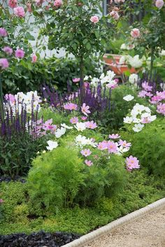 'A Growing Obsession Garden' with Cosmos, Salvia and roses.