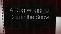 A dog wagging day in the snow. Nyon Switzerland  #dogs, #switzerland