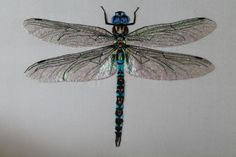 Dragonflies on Pinterest | Dragonfly Drawing, Dragonfly Tattoo and ...