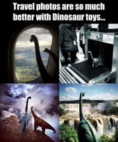 To Jurassic Park. Funny Cute, Hilarious, Haha, Cool Pictures, Funny Pictures, Images Gif, T Rex, Make Me Smile, Travel Photos